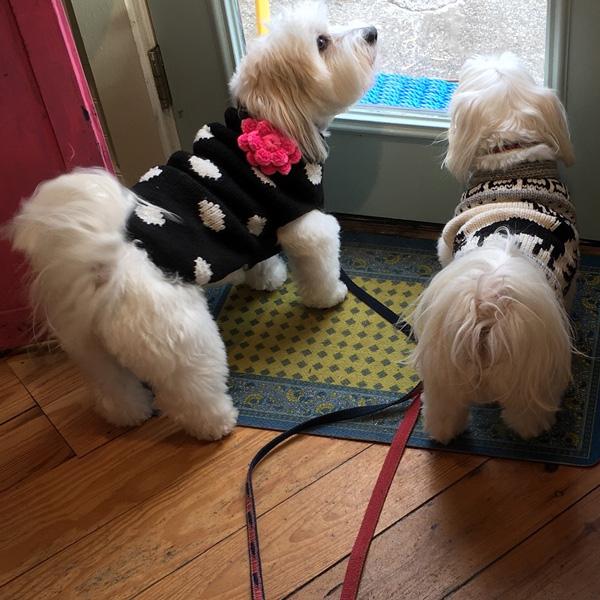 image: Maddie & Murphy visit Carol Lee's Cottage.